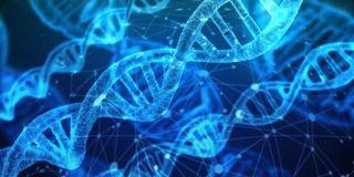アルコール自体を分解するのが速い体質か遅い体質かは遺伝子を調べないと分からない